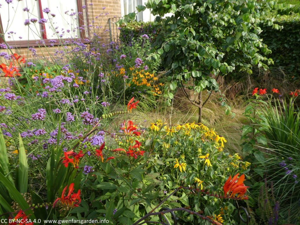 A part overview of the front garden which show different areas planted with flowering Crocosmia, as well as other yellow and purple flowering plants mingled amongst them. On the middle right is the Quince tree, underplanted with green-yellow fine grasses.