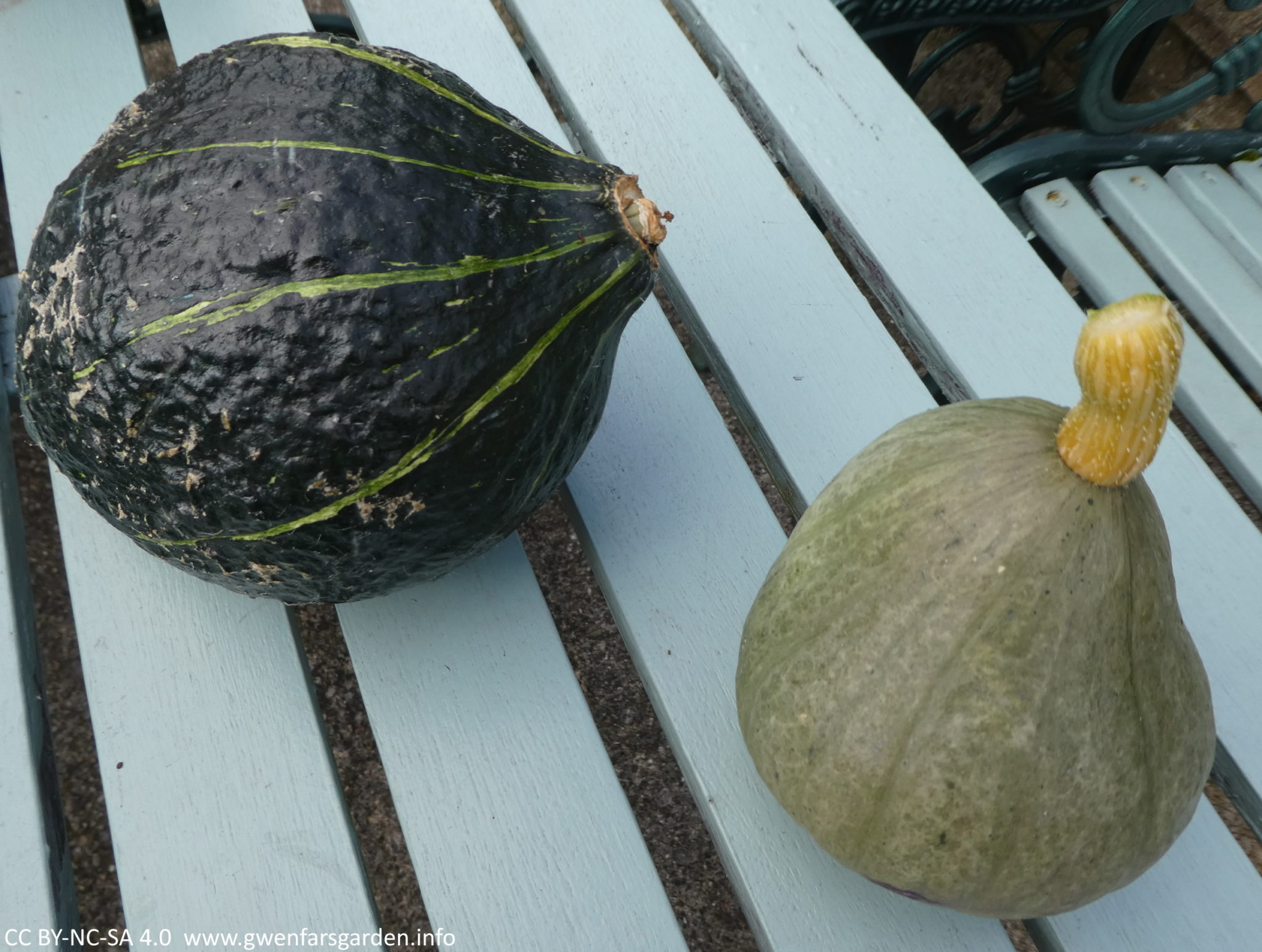 The medium and smaller sized pumpkins. On the left is the dark green one with light green stripes, and on the right is a small Kabocha light green one that would easily fit in your hand.