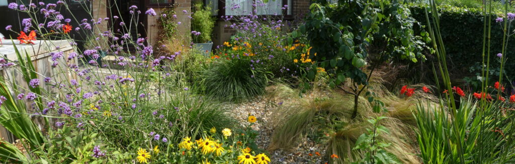 A landscape view of the front garden in August 2020. You can see a mix of flowers in reds, yellows, oranges and purples, along with grasses and a young Quince tree. The front of the house is at the back of the photo and to the left is a wooden bin storage unit.