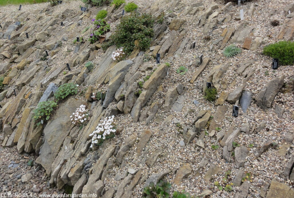 An area of stones and larger rocks at a c. 45 degree angle, mimicking an alpine mountain side. There are lots of grey to grey-orange large flat stones that have been embedded in, with smaller stones then holding the plants in place. It was earlier in the year when taken, so there are only a few plants flowering  with white flowers at this time.