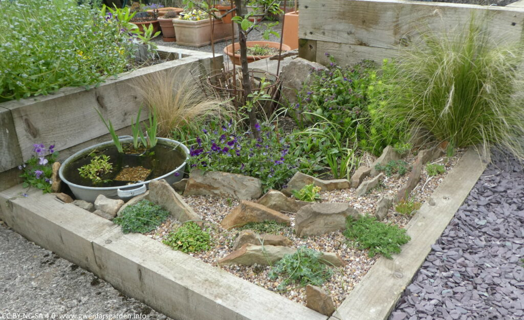 A slightly wider view of the alpine scree bed within the Damson border. At the front is the alpine scree bed with taller thinner rocks interspersed with small green plants, and the surface area covered with horticultural grit. There is a small aluminium container pond to the left and taller wooden raised beds at two sides. You can just see the think trunk base of the Damson tree, with mixed planting under it. In the background are some terracotta pots with plants in them.