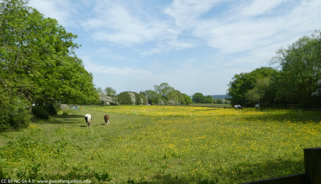 A field of golden buttercups surrounded by trees, and with four horses chomping on the grass.