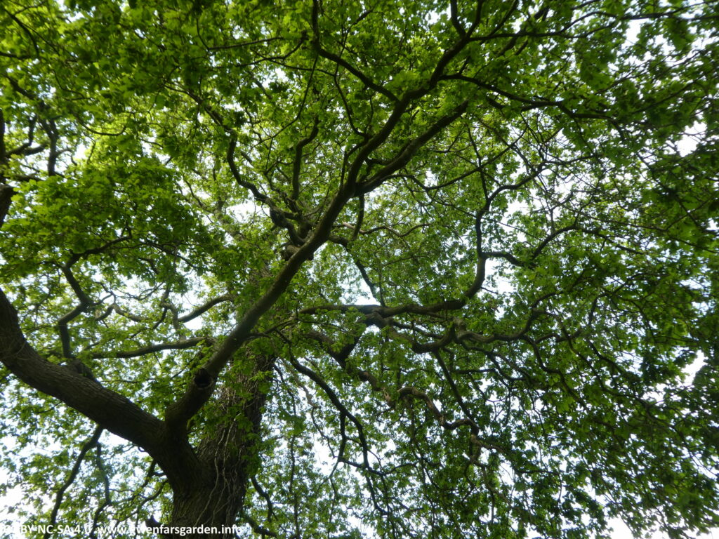 Looking up at a tree canopy. You can see lots of branches squiggling out from the main trunk, with fresh Spring green foliage, and peeking through is a cloudy-blue sky.