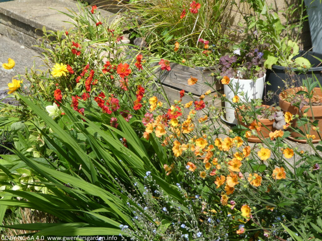 Looking at a section of a border with orange, red, yellow and blue flowers and green foliage.