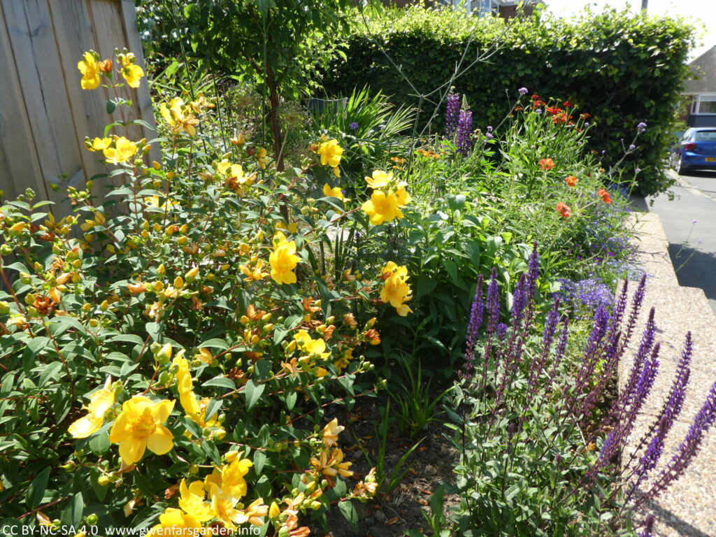 An view of the street-facing edge of the front garden. In the forfront is a bush with bright yellow flowers and to its right, a perennial with 30cm long stalks of purple flowers. Behind are flowers of other colours including orange and red, as well as a thick green beech hedge.