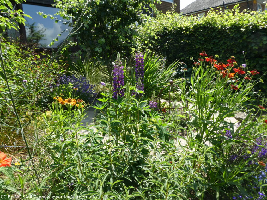 A snapshot of part of the front garden at the end of the month, with lots more growth and a mix of orange, red, purple and blue flowers.