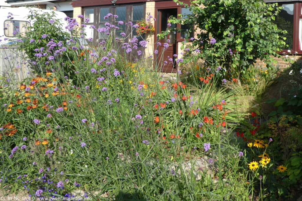 Looking from the right side of the footpath over the garden. A mix of plants in blues, purples, reds, oranges and yellows.