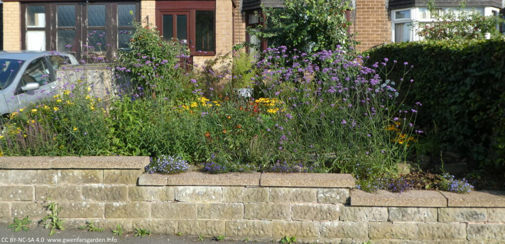 With the hedge gone, new plants have been added and have been growing over the summer. The wall separating our garden from the footpath has nothing sitting on top of it. This is the front garden yesterday.